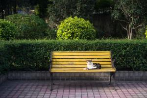 new-garden-bench